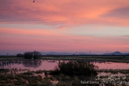 Whitewater Draw, Arizona, à l'aube