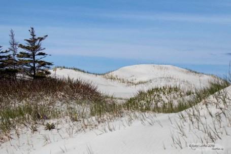 Dunes de sable - sentier Old Mail Road
