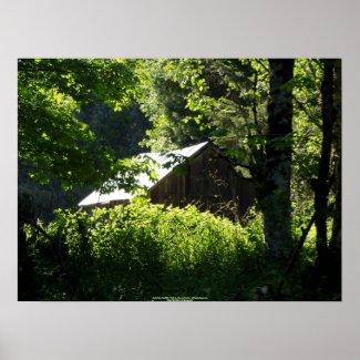 Sunlit Barn Roof #2