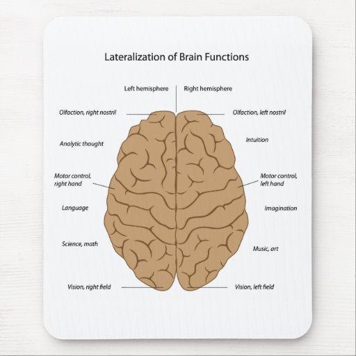 lateralization of brain functions mousepad zazzle