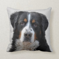 Bernese Mountain dog photo cushion