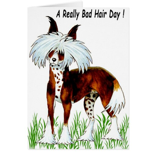 Chinese Crested Dog Bad Hair Day Greeting Card Zazzle
