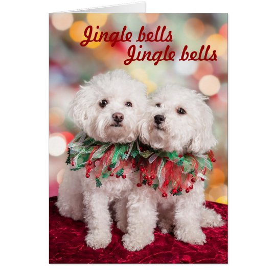 Jack Russell Christmas Cards Amp Invitations