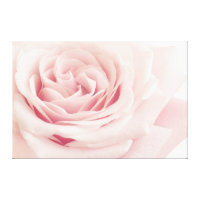 Light Pink Rose Flower - Roses Flowers Floral Canvas Print