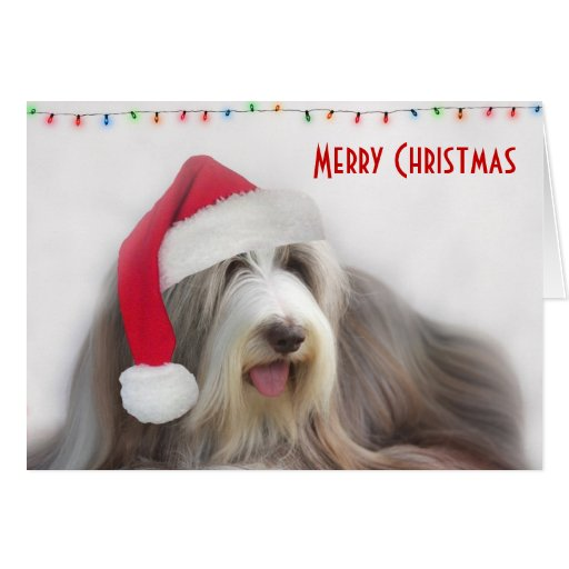 Merry Christmas Bearded Collie Cards Zazzle