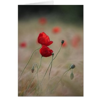 Poppy field cards
