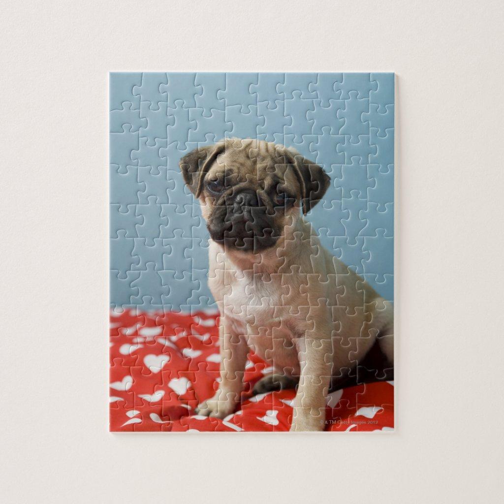 Pug puppy puzzle