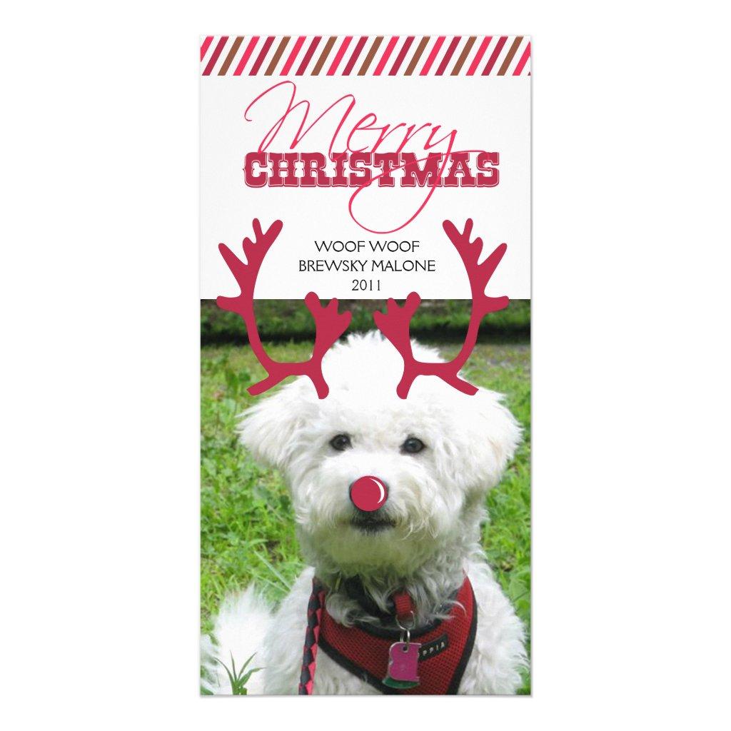 Reindeer Antler & Red Nose Pet Christmas!