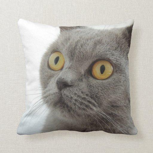 Up-Close British Shorthair Cat Throw Cushion