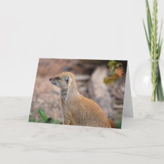Yellow Mongoose card