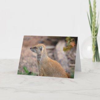 Yellow Mongoose card
