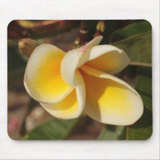 Frangipani flower mousepad