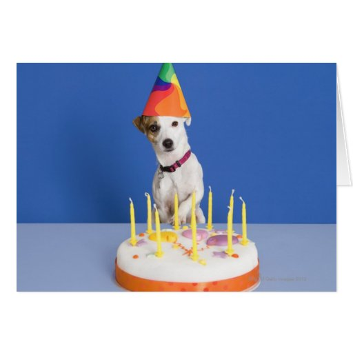 Jack Russell Terrier Birthday Cards