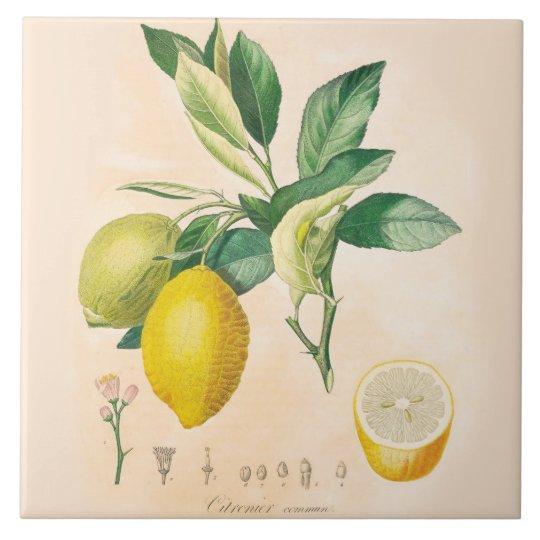 lemon fruit ceramic accent tile kitchen decor ceramic tile
