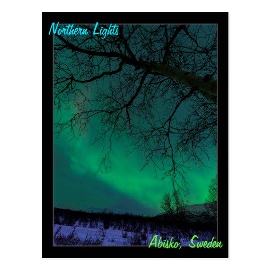 Northern Lights Dummies