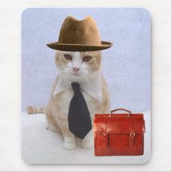 Scottish Fold Cat Named Bubba