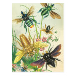 A Buzz of Beautiful Bees Postcards