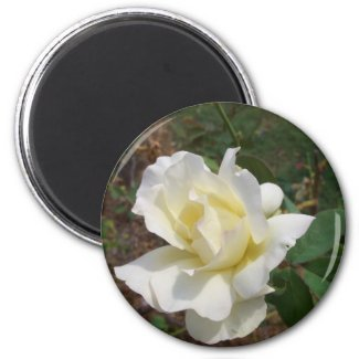 Aerodynamic White Rose - CricketDiane Art Products magnet