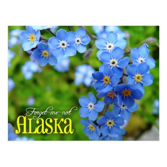 Alaska State Flower Forget Me Not Postcard