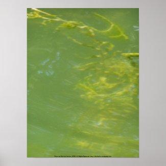Algae Frond Macro