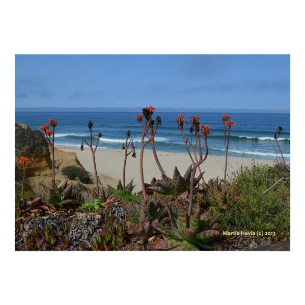 Aloe Vera in Half Moon Bay Poster