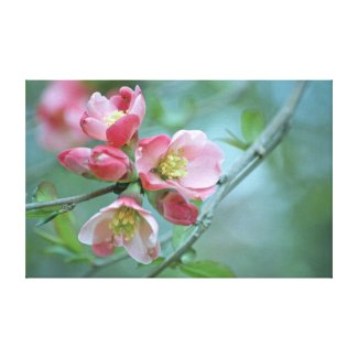 Apple Blossom #P0356 Wrapped Canvas wrappedcanvas