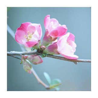 Apple Blossom #P0358 Wrapped Canvas wrappedcanvas