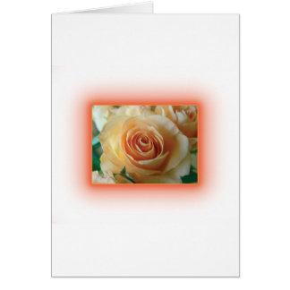 Apricot Rose Blur Card