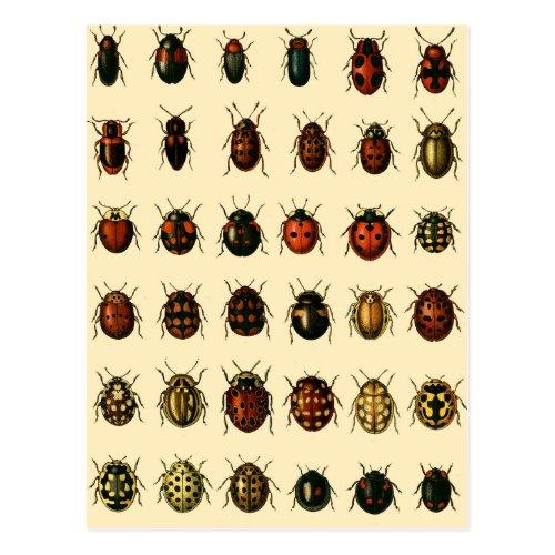 Array of Ladybirds Postcard