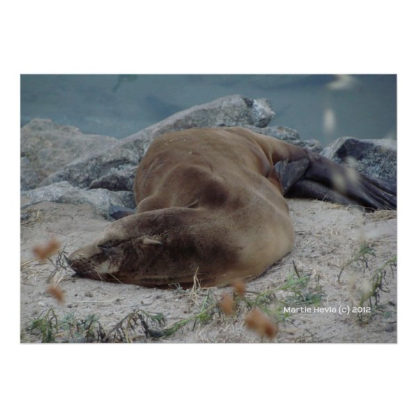 Asleep on the Rocks zazzle_print