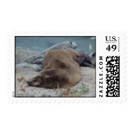 Asleep on the Rocks (Sea Lion) Postage