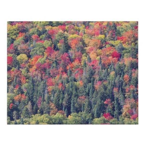 Autumn Forest Landscape Faux Canvas Print