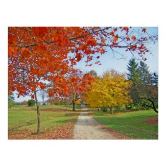Autumn Leaves Fall Poster