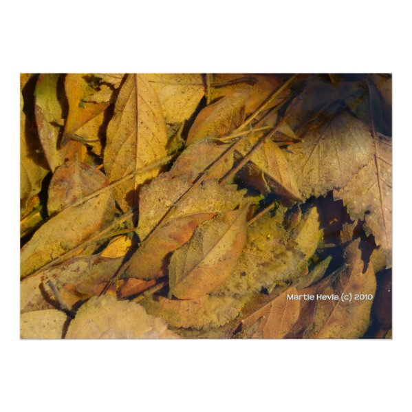 Autumn Leaves in a Rain Puddle print