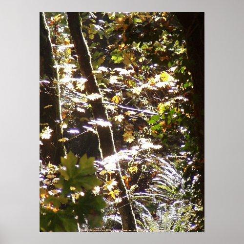 Autumn Sun Rays #12 print