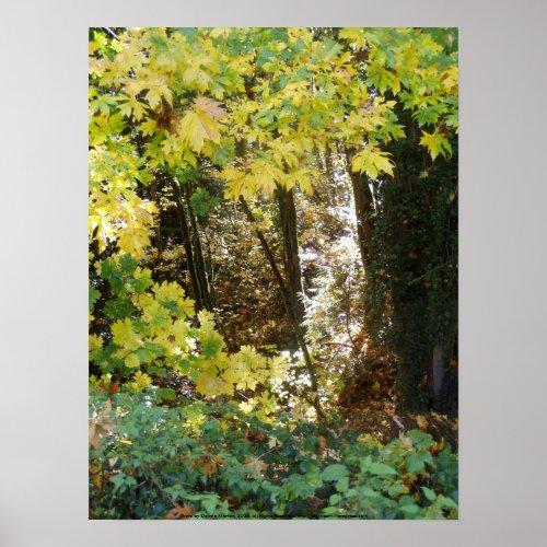 Autumn Sun Rays #2 print