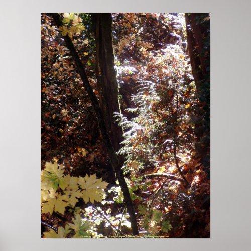 Autumn Sun Rays #3 print