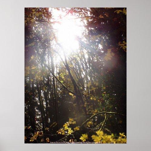 Autumn Sun Rays #43 print