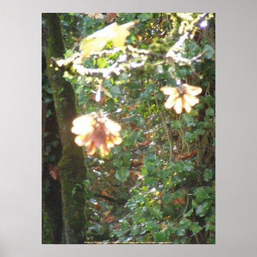 Autumn Sun Rays #44 print