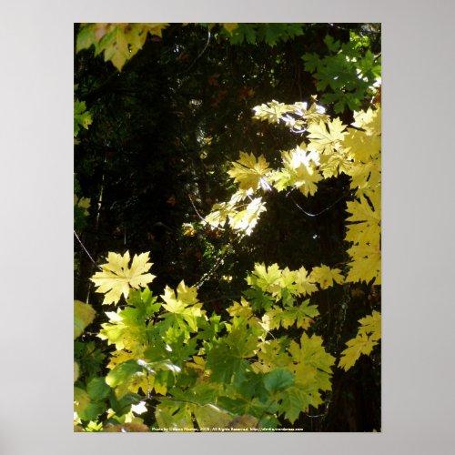 Autumn Sun Rays #5 print