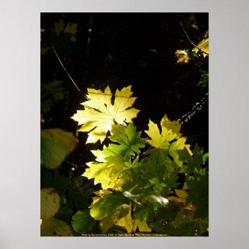 Autumn Sun Rays #6 print