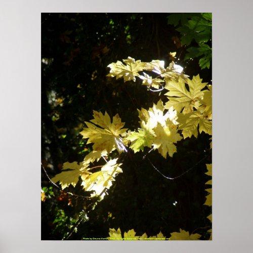 Autumn Sun Rays #7 print