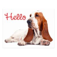 Basset Hound Puppy Dog Red Hello Thinking of You Postcard