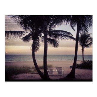 Beachcomber's Paradise