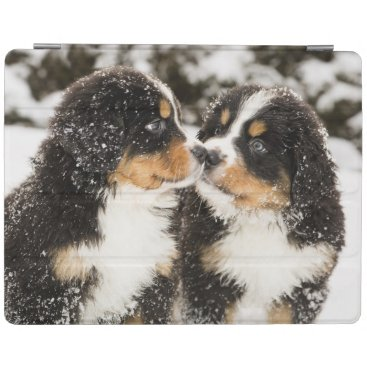 Bernese Mountain Dog Puppies Sniff Each Other iPad Smart Cover