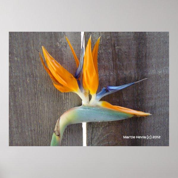 Bird of Paradise Poster