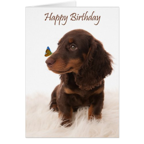 Birthday card dog with butterfly on nose