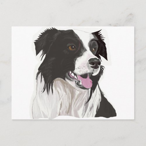 black and white collie brown eyes postcard