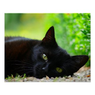 Green-Eyed Black Cat Photo