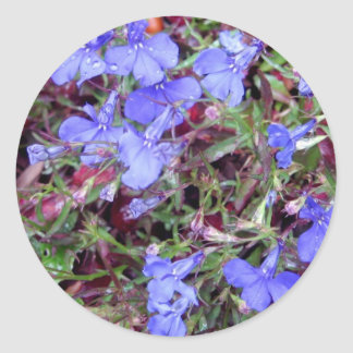 Blue Flower in California Sticker